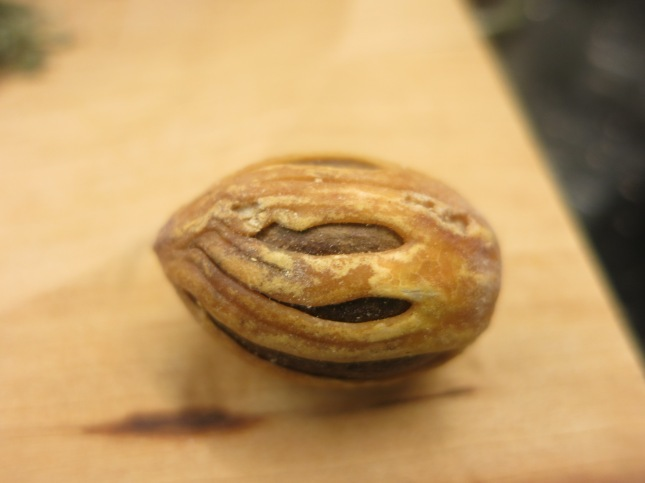 Mace around a Nutmeg