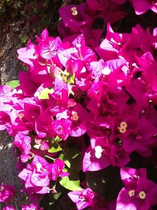Flowers from Pauline