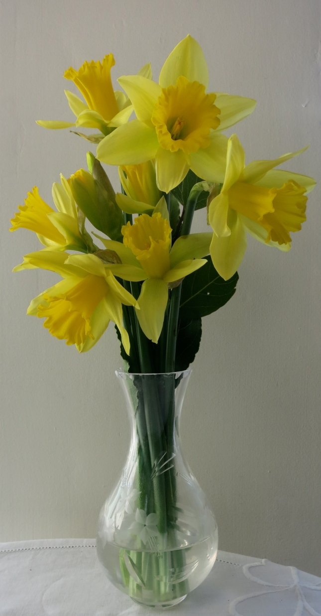 Claire's daffodils