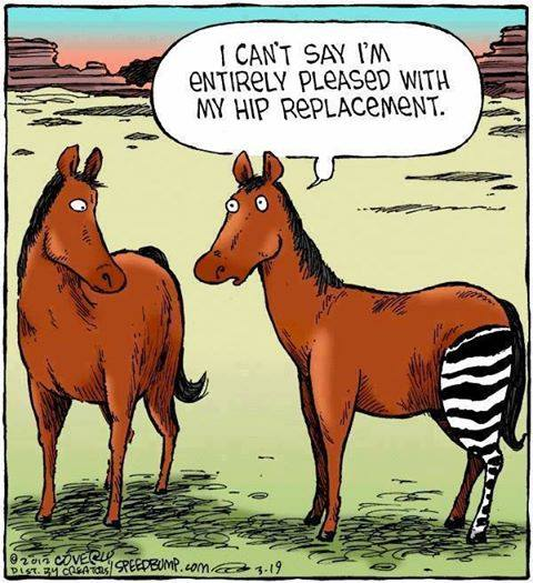 Hip replacement!