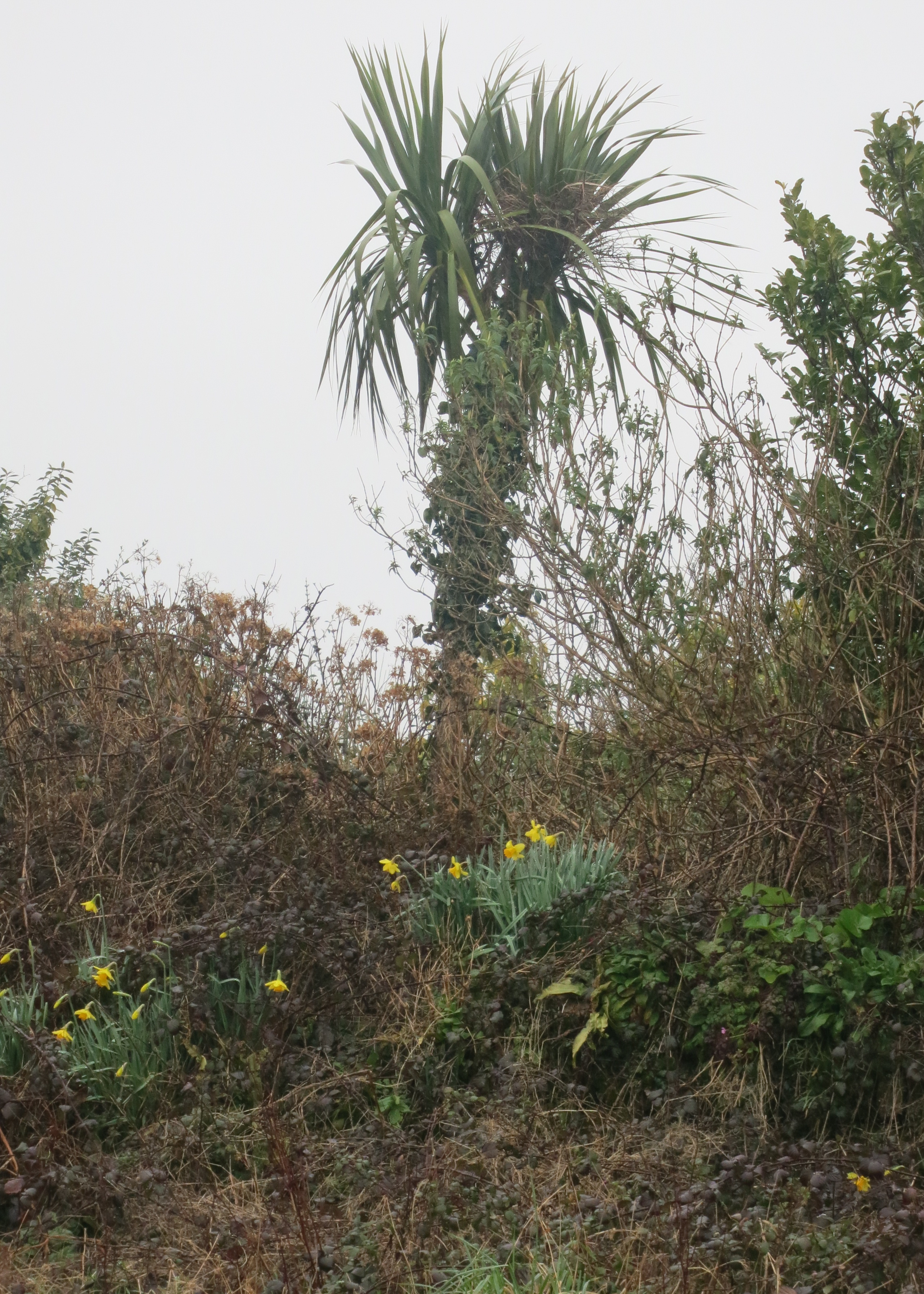 how to build a cornish hedge