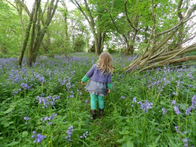Bluebell walking through the bluebells