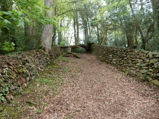 These two walls mark the old Cattle Rush where the cattle were driven down to the stream to drink.