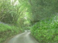 Cornish lane with Bluebells