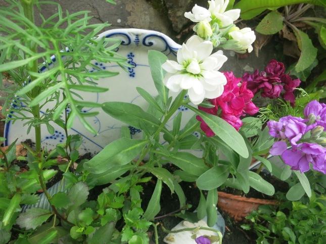 Boody garden 2015