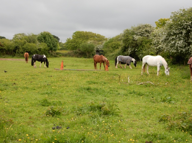 Some of the horses in the back field