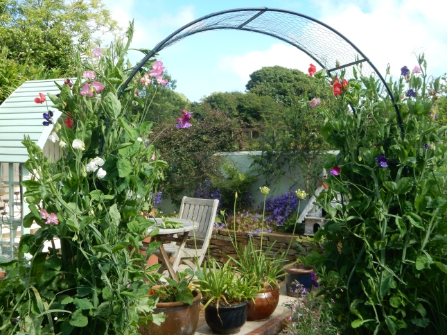 Sweet pea archway
