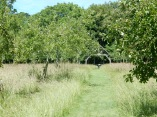 Through the orchard to the cider press