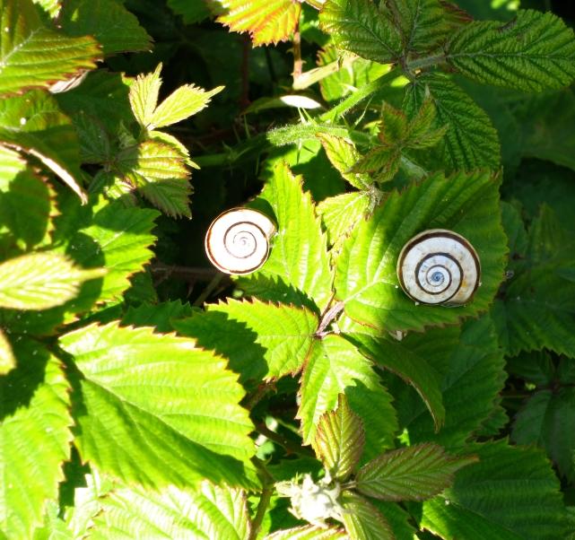 Snails near the beach, looking like a face