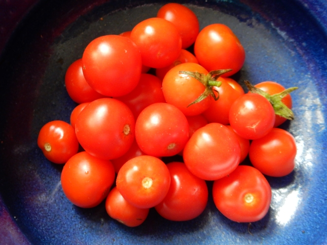 Our Cherry tomatoes, first picking