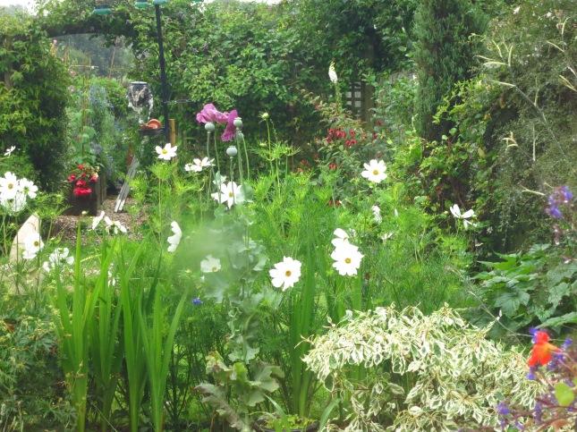 Rain drenched garden