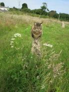 Freya in the stone circle