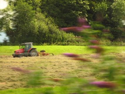 Tractor harvesting the hay