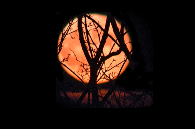 Moon by Plum Creek