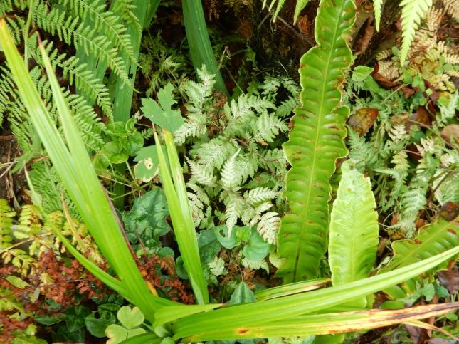 Varieties of ferns