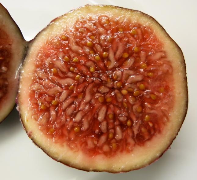 Juicy fig