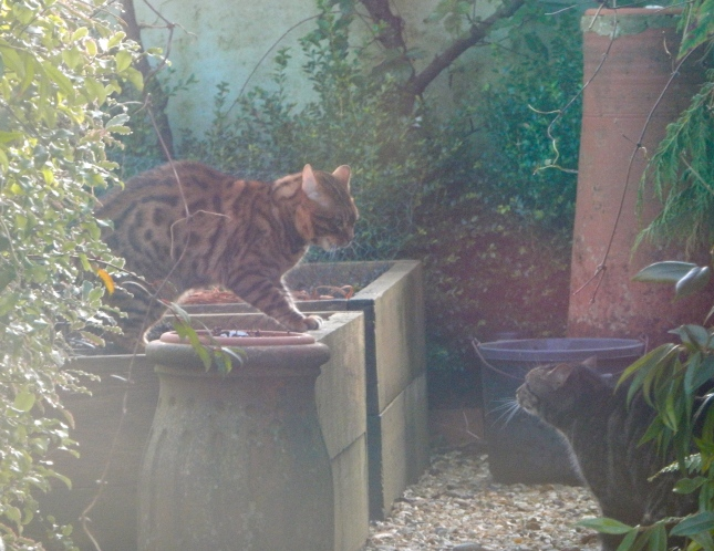 A new cat in the garden