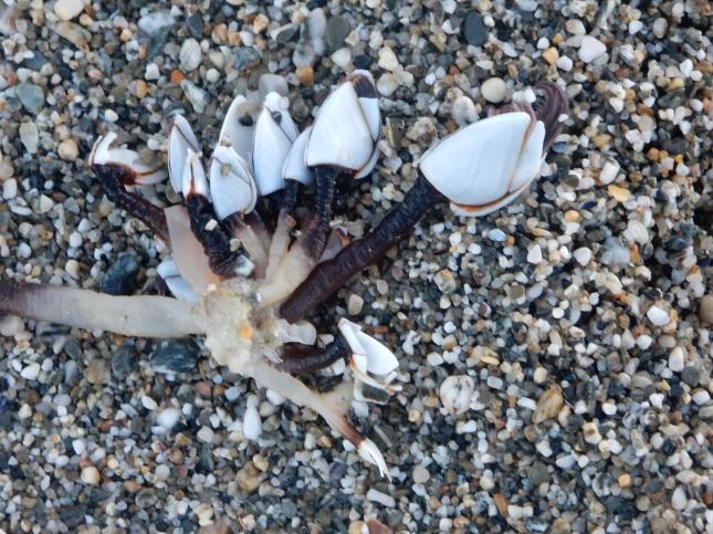 Little shells on the beach