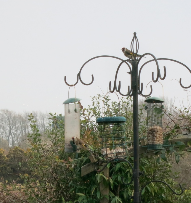 Two of the Goldfinches