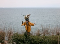 Scarecrow in an allotment along the coastal path
