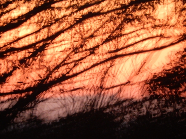 Abstract sunset through branches