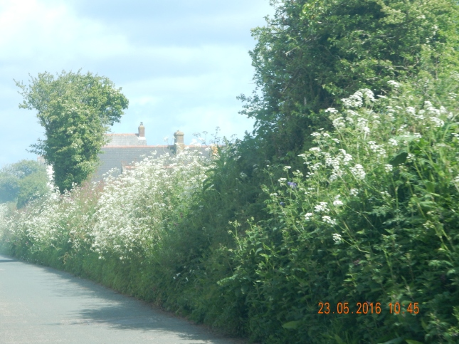 Lane near Kehelland