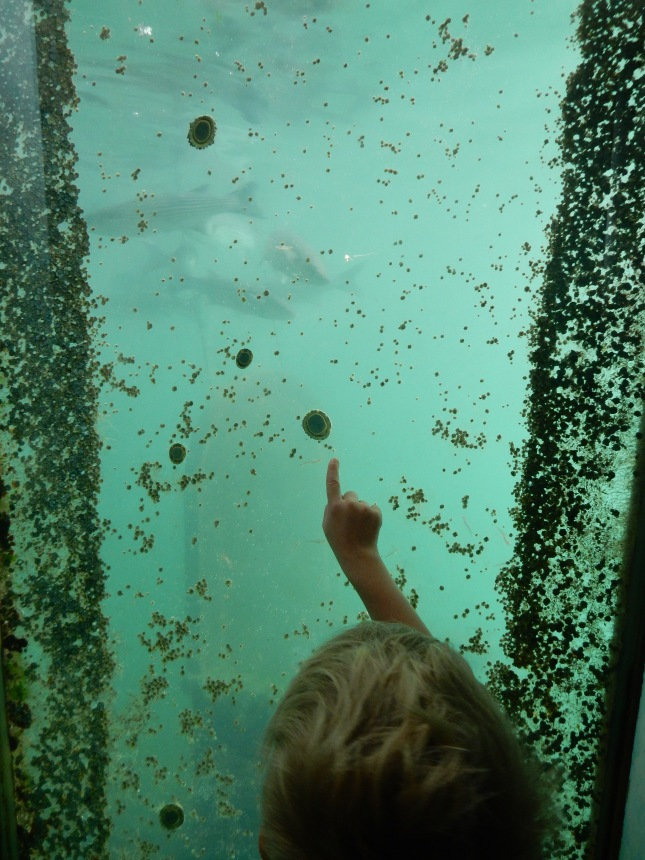 Down at sea level spotting fish and barnacles