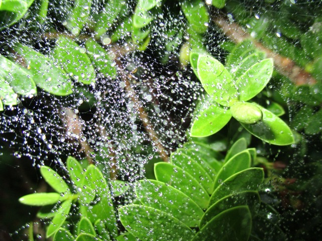 Tangled tear drop web