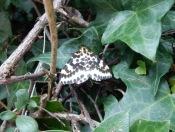 Moth?