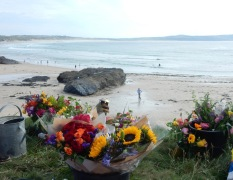 Flowers and Godrevy Beach