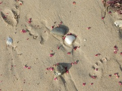 Rose petal confetti on the beach