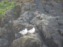 A pair of Sea gulls