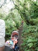 Walking back along the Woodland Trail
