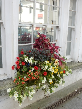 Colourful window box