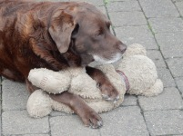 Big Issue seller's dog with his teddy