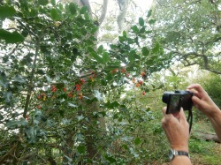 P taking a photo of the red berries