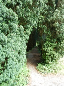 Avenue of Yew trees
