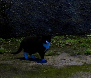 cat with blue feet