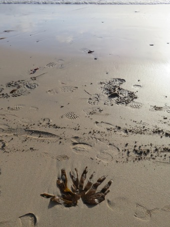 Sea weed and sea