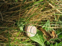 Whirly snail