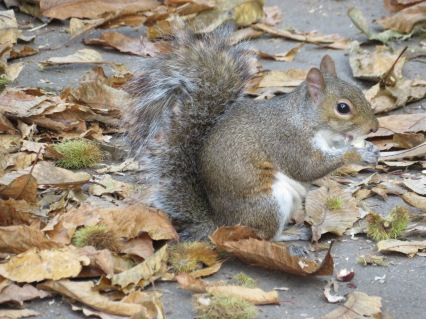 Feasting squirrel