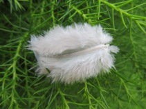 Feather against the green
