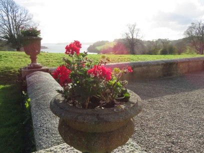 Geraniums on the terrace