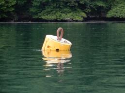 A Buoy