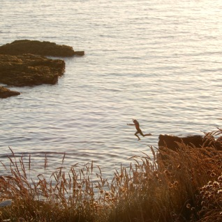 Boy jumping from the rocks