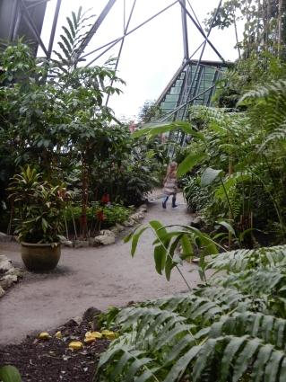 Running off in the Rainforest Biome