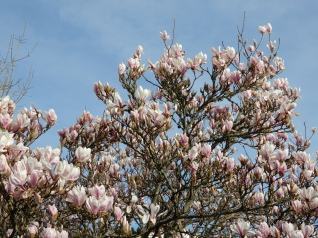 Lots of blossom