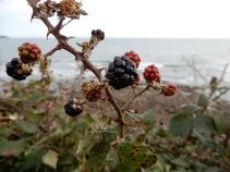 Blackberries by the sea