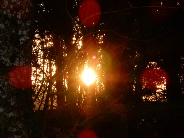 Setting sun through the trees and bokeh