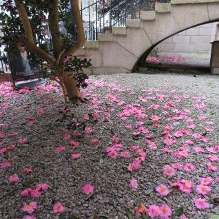 Camellia confetti